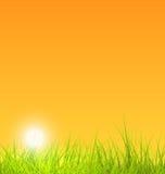 Fondo con la hierba, puesta del sol de la naturaleza del verano Foto de archivo libre de regalías