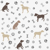 Fondo con la impresión y el hueso de la pata de los perros Imagenes de archivo