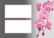 Fondo con la orquídea de la rama Stock de ilustración