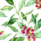 Fondo con la pianta disegnata a mano del caffè dell'acquerello royalty illustrazione gratis