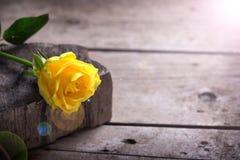 Fondo con la rosa hermosa del amarillo foto de archivo