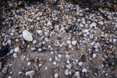 Fondo con la sabbia e le conchiglie Superficie sabbiosa fotografie stock libere da diritti