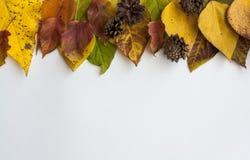 Fondo con la struttura dalle foglie di autunno royalty illustrazione gratis