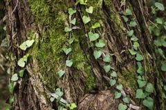 Fondo con la vegetazione del colorfull Fotografia Stock Libera da Diritti