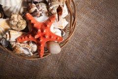 Fondo con las cáscaras y las estrellas de mar y con el espacio en blanco para usted Fotos de archivo