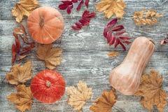 Fondo con las calabazas y las hojas de otoño en los tableros de madera grises Fotos de archivo