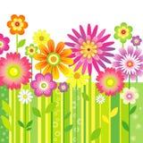 Fondo con las flores Foto de archivo libre de regalías