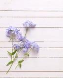 Fondo con las flores azules Fotografía de archivo libre de regalías