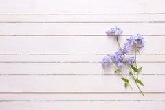 Fondo con las flores azules Imágenes de archivo libres de regalías