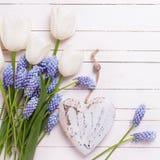 Fondo con las flores azules de los muscaries, los tulipanes blancos y el decorat Fotos de archivo