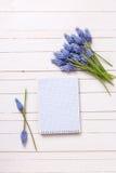 Fondo con las flores azules de los muscaries y el cuaderno vacío para t Imagenes de archivo