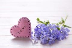 Fondo con las flores azules y el corazón decorativo rosado Fotos de archivo libres de regalías
