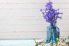 Fondo con las flores azules y la rama floreciente de la primavera blanca Imagen de archivo libre de regalías