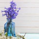 Fondo con las flores azules y la rama floreciente de la primavera blanca Fotos de archivo libres de regalías