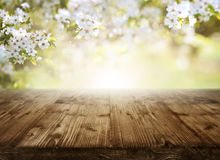 Fondo con las flores de cerezo y la tabla Fotografía de archivo