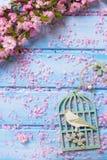 Fondo con las flores rosadas elegantes en tablones de madera azules Fotos de archivo libres de regalías