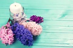 Fondo con las flores rosadas, violetas, azules frescas de los jacintos y c Imagen de archivo