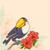 Fondo con las flores y el tucán Foto de archivo libre de regalías
