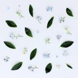 Fondo con las flores y las hojas Foto de archivo libre de regalías