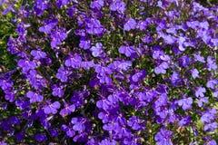 Fondo con las flores y las hojas violetas brillantes del verde Imagen de archivo