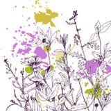 Fondo con las hierbas y las flores del dibujo Foto de archivo libre de regalías