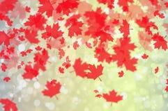 Fondo con las hojas de arce Fotografía de archivo libre de regalías