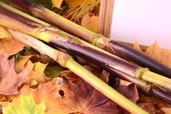 Fondo con las hojas de otoño y el marco de madera Fotografía de archivo