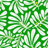 Fondo con las hojas de palma Modelo inconsútil tropical con Mons Foto de archivo
