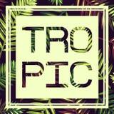 Fondo con las hojas de palma y el marco tropicales tarjeta trópico Imagen de archivo