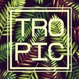 Fondo con las hojas de palma y el marco tropicales tarjeta trópico Fotos de archivo