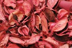 Fondo con las hojas rosadas Foto de archivo libre de regalías