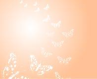 Fondo con las mariposas Fotografía de archivo