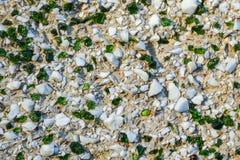 Fondo con las piedras blancas y el vidrio verde fotos de archivo
