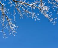 Fondo con las ramas de árbol en escarcha Fotografía de archivo libre de regalías