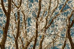 Fondo con las ramas de árbol en escarcha Fotos de archivo