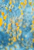 Fondo con las ramas de los árboles de abedul con el leav de oro del otoño Imágenes de archivo libres de regalías