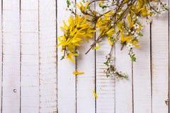 Fondo con las ramas florecientes de la primavera amarilla y blanca de t Imagenes de archivo