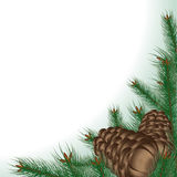 Fondo con las ramificaciones y los conos del pino Foto de archivo
