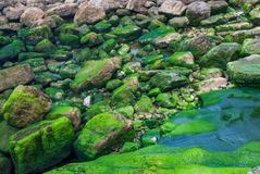 Fondo con las rocas grises y verdes con agua foto de archivo libre de regalías
