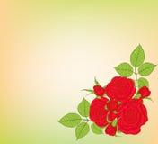 Fondo con las rosas Foto de archivo