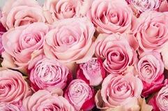 Fondo con las rosas rosadas hermosas Fotos de archivo libres de regalías