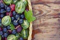 Fondo con le bacche dell'uva spina e del ribes nero Immagini Stock