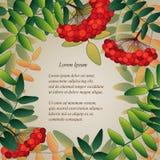 Fondo con le bacche di sorbo e le foglie Royalty Illustrazione gratis