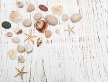 Fondo con le conchiglie e le stelle marine Immagine Stock