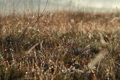 Fondo con le erbacce e la magia di luce all'alba in autunno fotografie stock libere da diritti