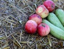 Fondo con le mele rurali di autunno dell'azienda agricola Fotografie Stock