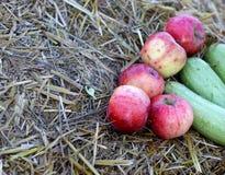 Fondo con le mele rurali di autunno dell'azienda agricola su fieno Fotografia Stock
