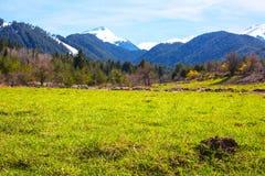Fondo con le montagne verdi del campo e della neve di erba della molla lontano Fotografia Stock Libera da Diritti