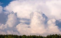 Fondo con le nuvole e le cime d'albero Fotografia Stock