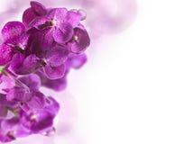 Fondo con le orchidee Fotografie Stock